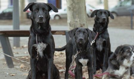 Amandine Turri Hoelken – « ZONE 54 : À la recherche des punks à chiens »